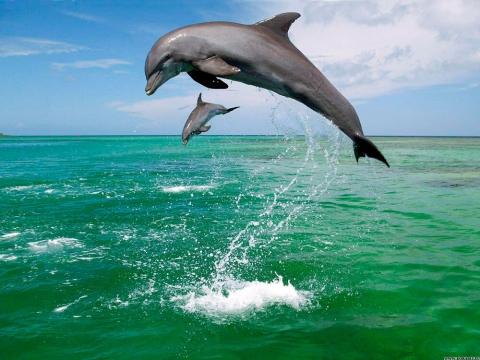 Дельфинирование